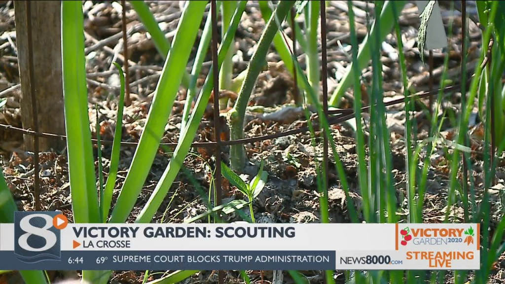 Victory Garden Scouting