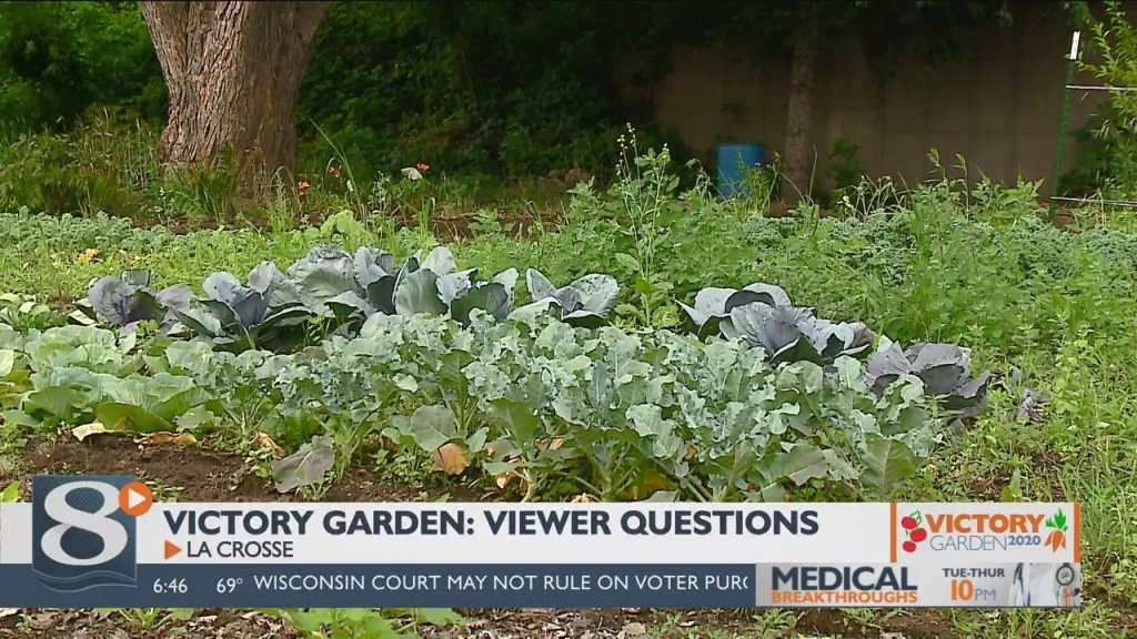 Victory Garden: Answering Viewer Questions