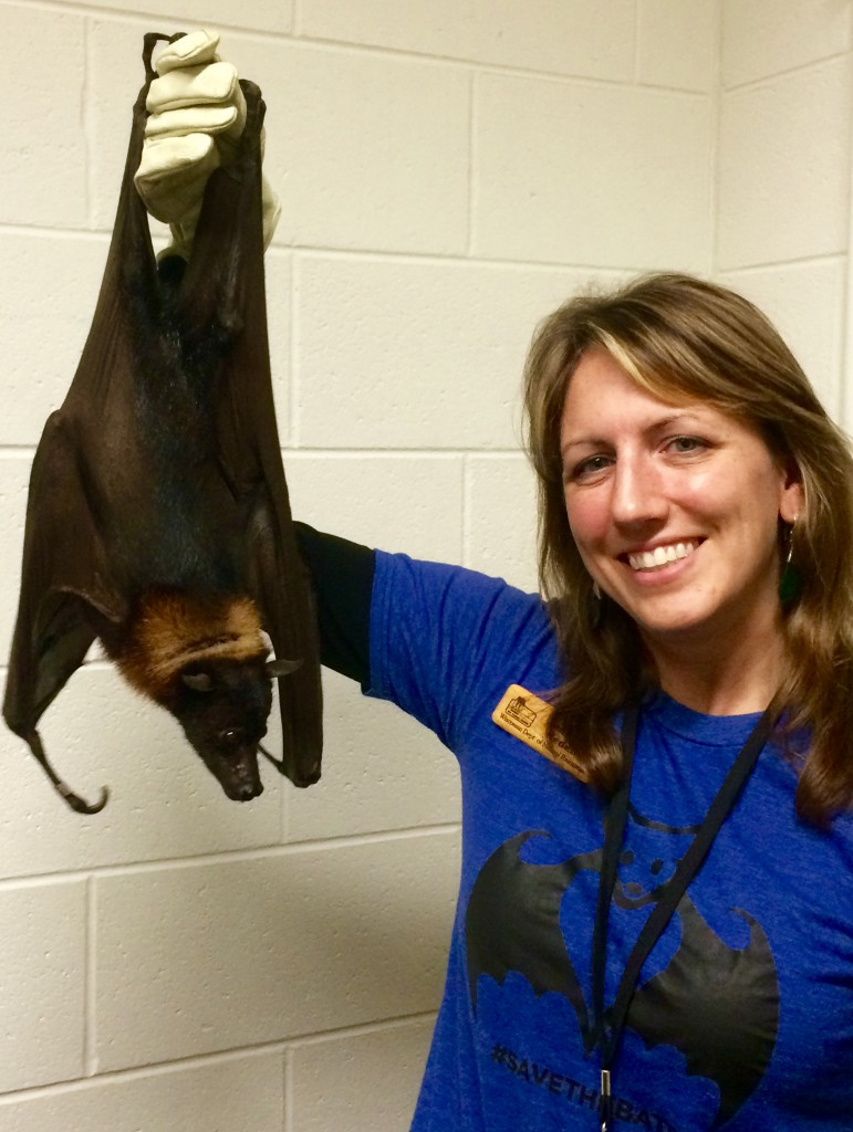Redell And Fruit Bat