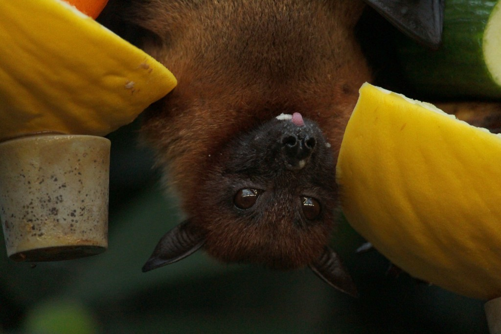 Close Up Photo Of Bat 2587639