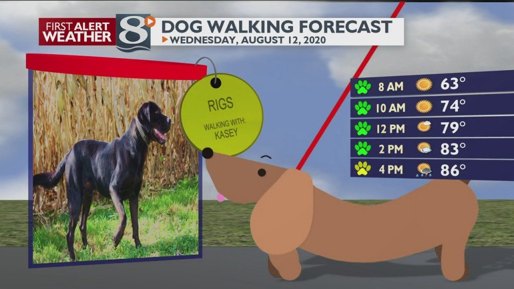 Dog Walking Forecast 8/12/20