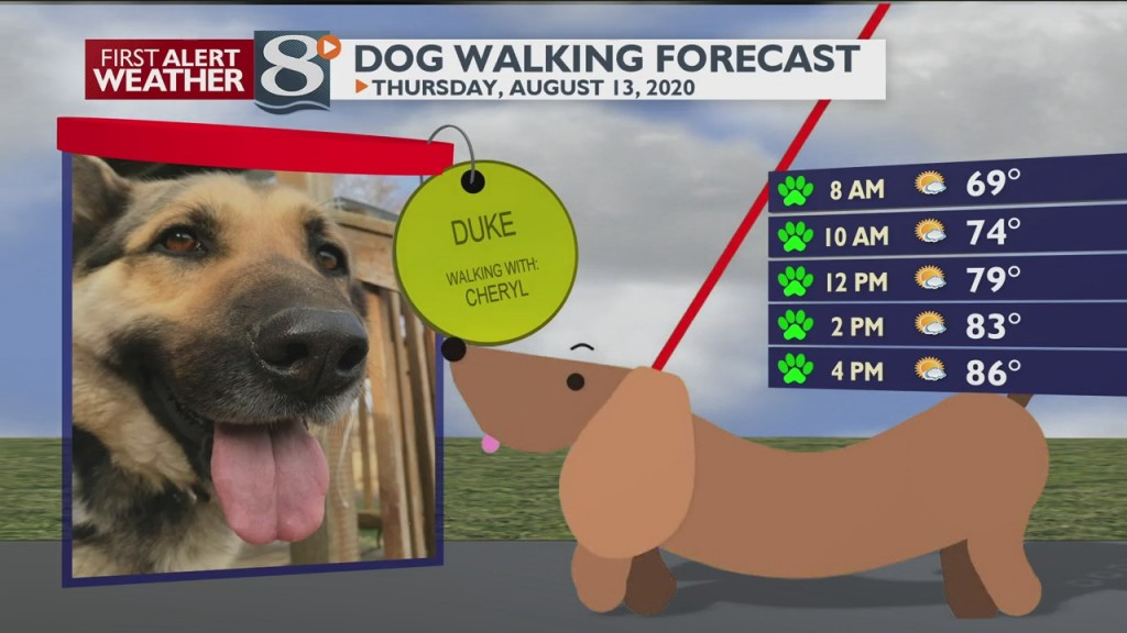 Dog Walking Forecast 8/13/20