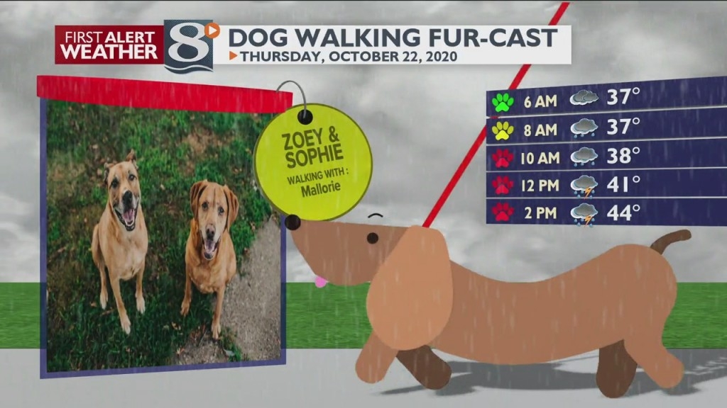 Dog Walking Fur Cast 10/22/20