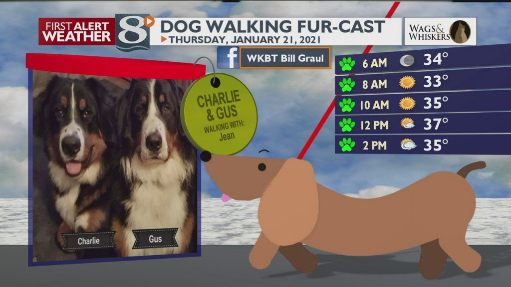 Dog Walking Fur Cast 1/21/21