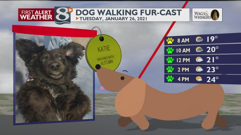 Dog Walking Fur Cast 1/26/21