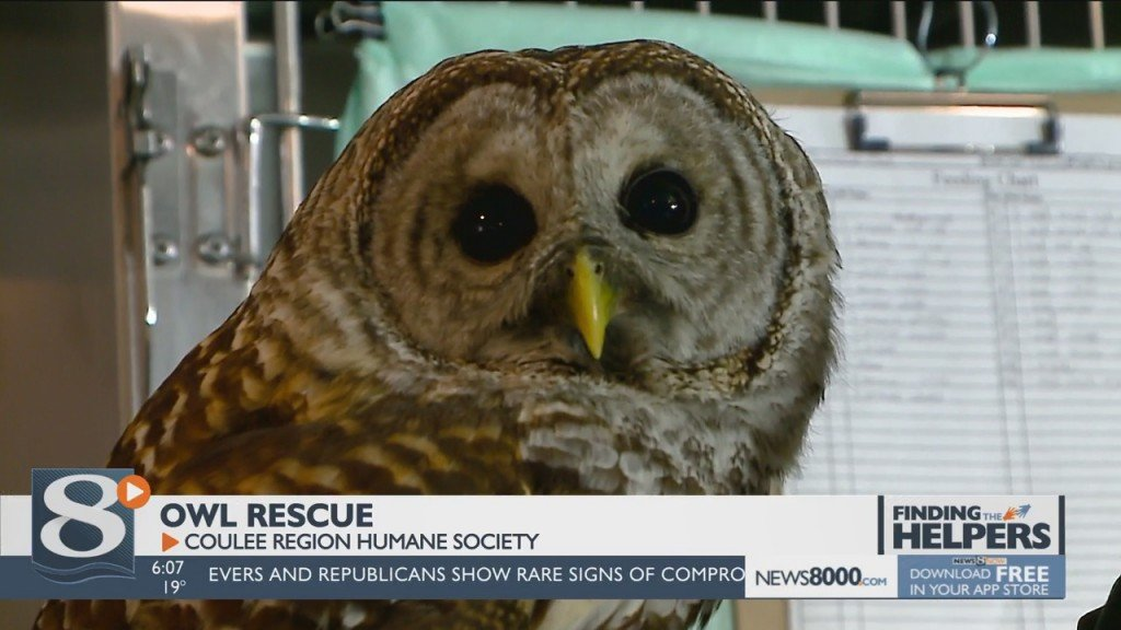 Rescued Owls