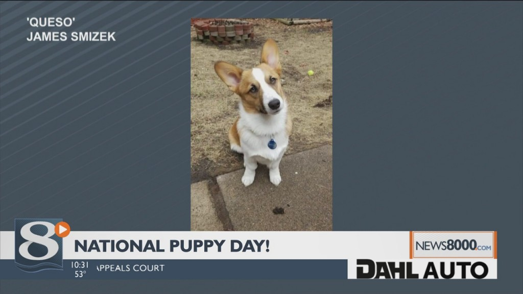 Puppy Palooza! Viewers Send In Photos Of Their Pups For National Puppy Day
