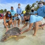 Earth Day: Rehabilitated Sea Turtle Released In Florida Keys