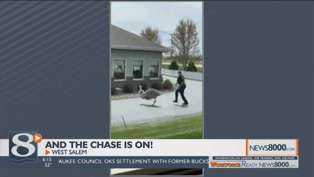 High Speed Emu Chase Caught On Tape In West Salem