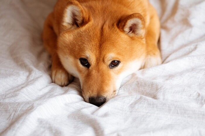 Dogecoin Is Crashing: Is Now The Time To Invest?