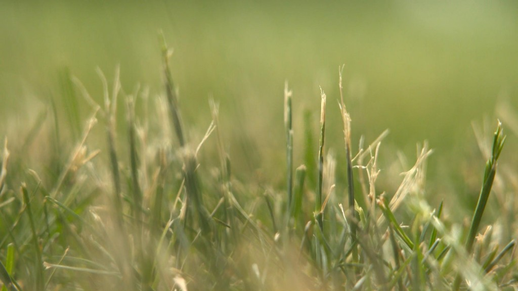 Lawn Care In Drought