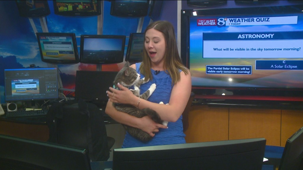 Daily Holiday National Adopt A Cat Month