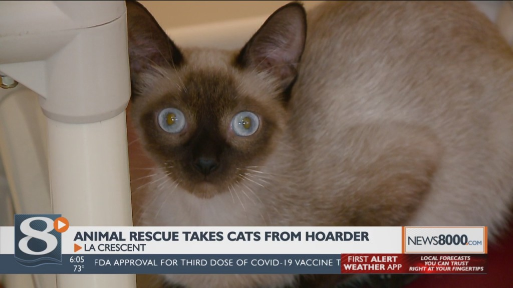 La Crescent Animal Rescue Takes In Cats From Hoarding Situation