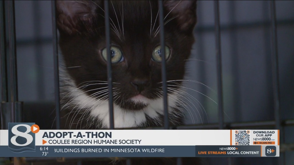 Coulee Region Humane Society Holds Adopt A Thon