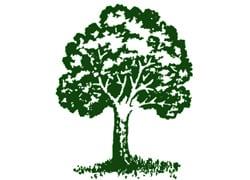 Northeast Shade Tree