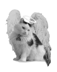 The Power of Angels, Kitty Angels Fundraiser @ Treasures Antiques |  |  |