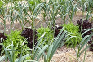 Grow Your Own Soil with Permaculture @ Strawbery Banke Museum | Portsmouth | New Hampshire | United States