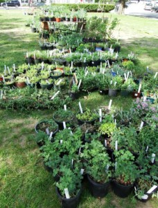 Milford Garden Club Plant Sale @ Community House Lawn | Milford | New Hampshire | United States
