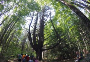 Our Big Backyard Series @ Prescott Farm Environmental Education Center  | Laconia | New Hampshire | United States