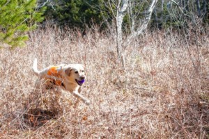 Bear Paw Speaker Series: New England K9 Search and Rescue @ Hooksett Library | Hooksett | New Hampshire | United States