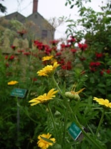 Garden Herbs: Their Cultivation, Cookery, Cures, and Caveats @ Strawbery Banke Museum | Portsmouth | New Hampshire | United States