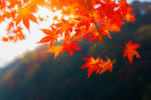 Fall Foliage Celebration @ Town Sqaure Waterville Valley Resort | Waterville Valley | New Hampshire | United States