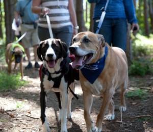 Walk for the Animals @ Northeast Delta Dental Field | Concord | New Hampshire | United States