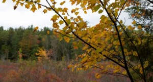 5 Hikes in 5 Weeks @ Merrimack River Outdoor Education and Conservation Center   Concord   New Hampshire   United States