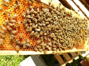 Beginning Beekeeping Course @ Living Land Permaculture Homestead | Barrington | New Hampshire | United States