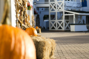 Waterville Valley Halloween Celebration @ Waterville Valley Town Square   Waterville Valley   New Hampshire   United States
