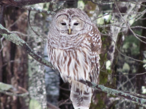Explore Together: Owling Class for Families @ Prescott Farm Environmental Education Center | Laconia | New Hampshire | United States