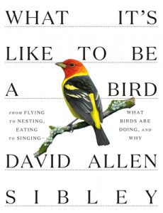 """""""What It's Like to Be a Bird"""" by David Allen Sibley @ Gibson's Bookstore 