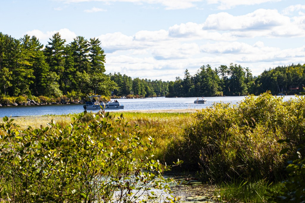 New Hampshire, Moultonborough, The Loon Center And Trails