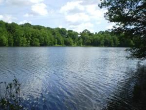 Pine Island Pond