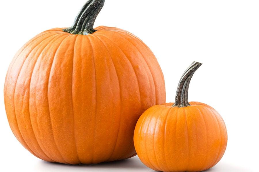 Pumpkin32