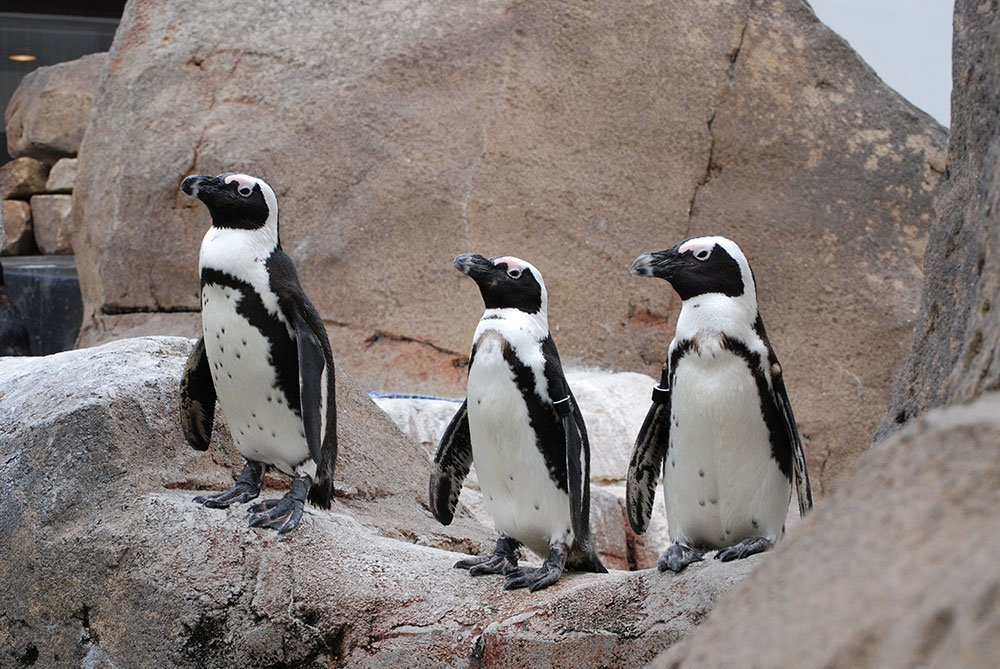 Pgh Mag Native Photo Penguin Colony