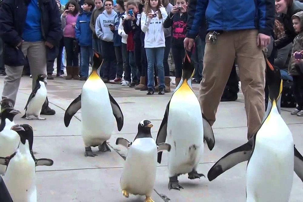 Penguinsonparade