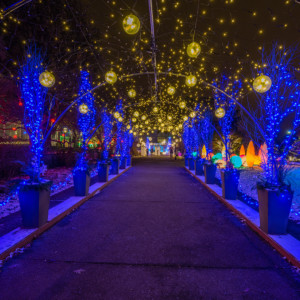 Holiday Magic! Winter Flower Show and Light Garden @ Phipps Conservatory and Botanical Gardens | Pittsburgh | Pennsylvania | United States