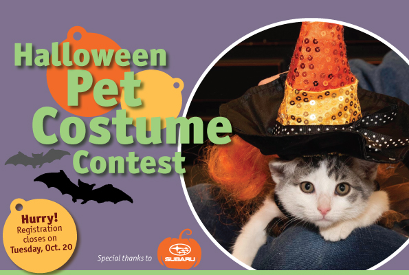 Halloween Pet Costume Contest Eblast Header
