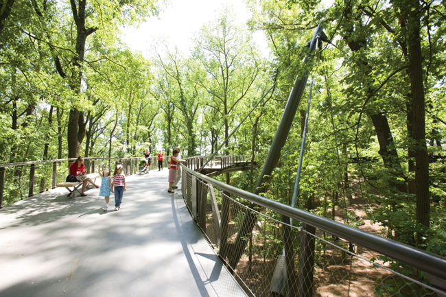 Canopy Walk By Erica George Dines 045