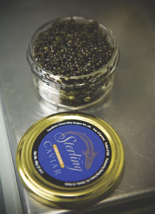 Caviar 11