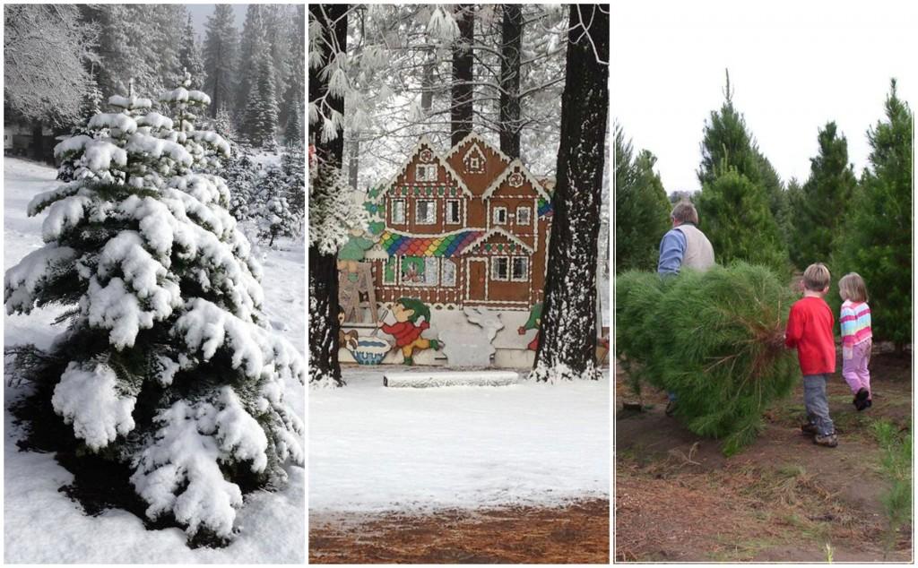 Christmastreecollage
