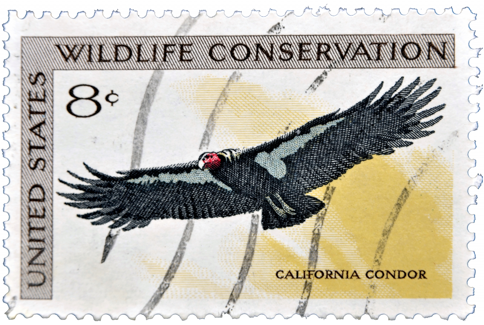 Advances in genomics allowed scientists to rescue the California condor from extinction, rebuilding the wild population from 22 birds to almost 300 through targeted breeding.