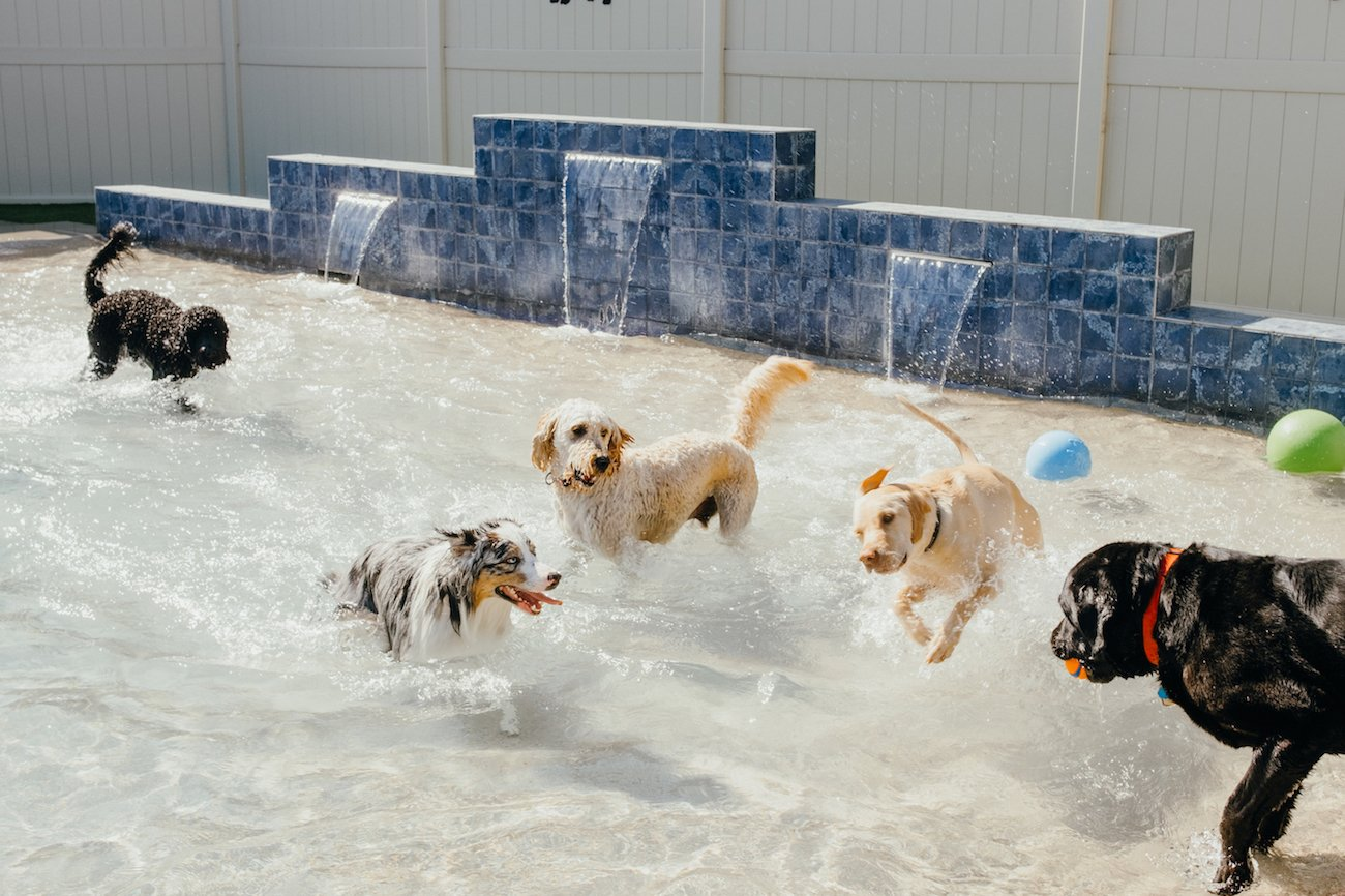 Dogs play in The Local Bark Park's splash pool.