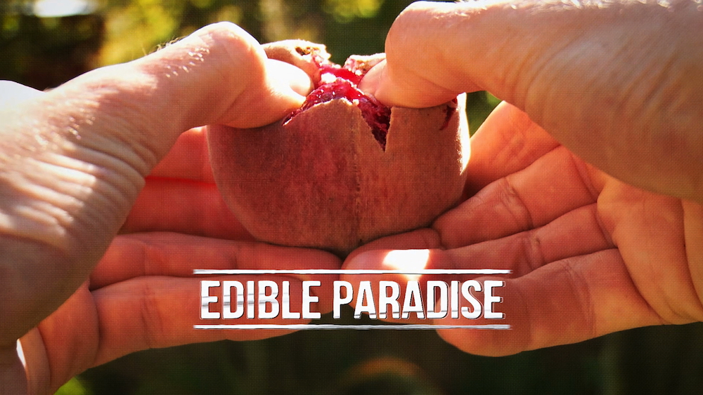 This documentary follows New Zealanders as they fight to keep their food legacy alive through food forests. (Photo courtesy of Edible Paradise)