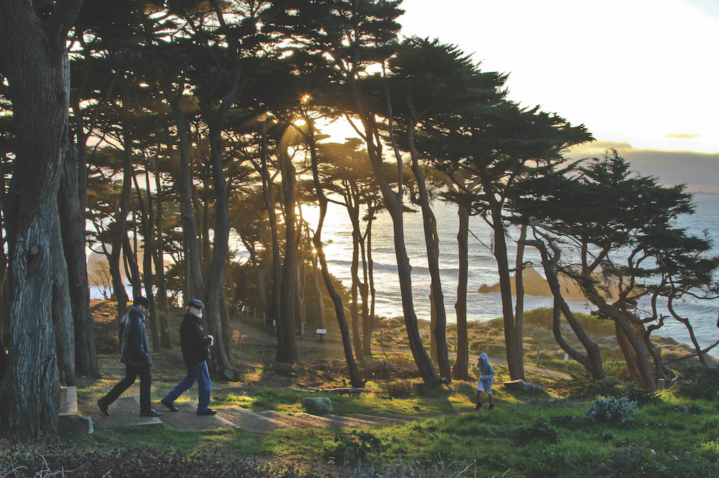 Walk under the shade of tall cypress trees at Lands End. (Photo by Will Elder/NPS)