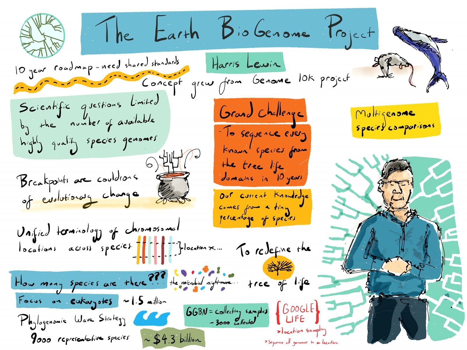 Scientific illustrator Alex Cagan live-sketched the presentation Lewin gave on the Earth BioGenome Project at England's Wellcome Sanger Institute in May 2017. (Illustration courtesy of Alex Cagan)