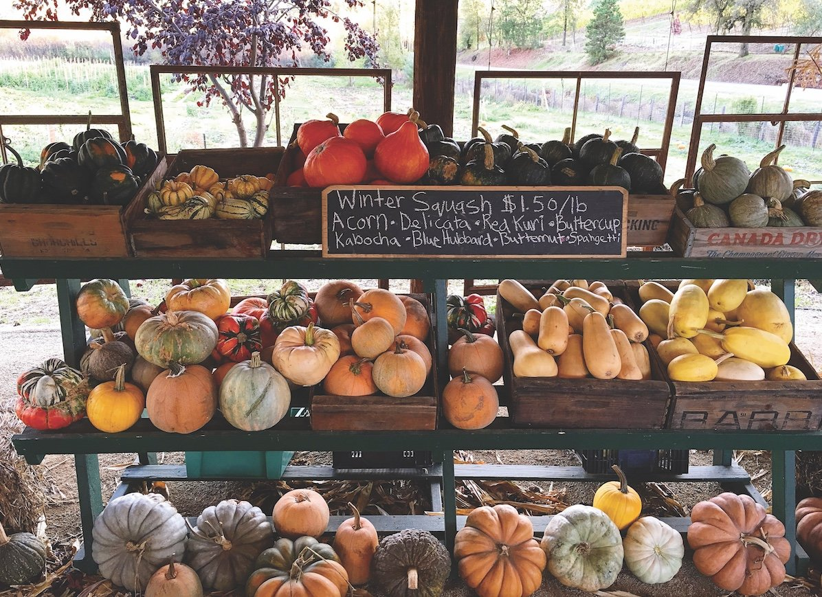The orange crush of squashes at 24Carrot Farm (Photo courtesy of 24Carrot Farm)