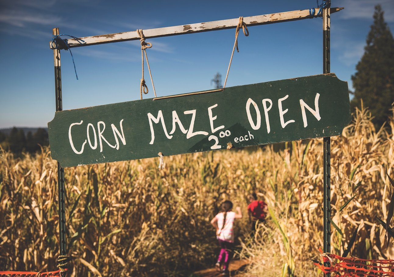 Make your way through a corn maze at Delfino Farms. (Photo by Max Whittaker)
