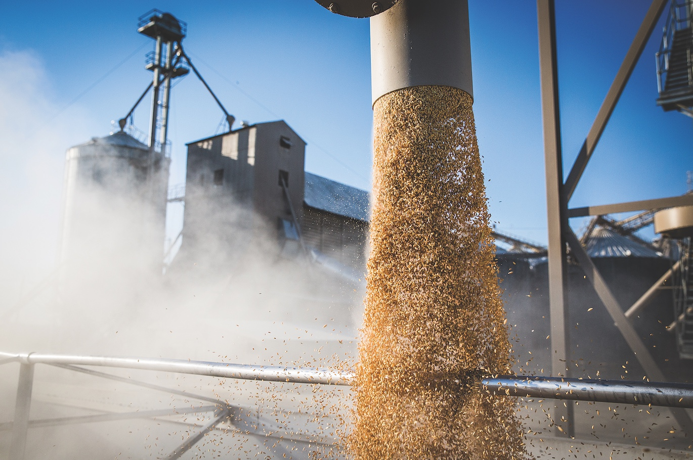 A crop of rice gets loaded onto a truck at Montna Farms. (Photo by Max Whittaker)